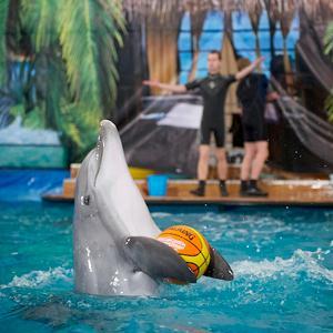 Дельфинарии, океанариумы Набережных Челнов