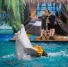 Дельфинарии, океанариумы в Набережных Челнах